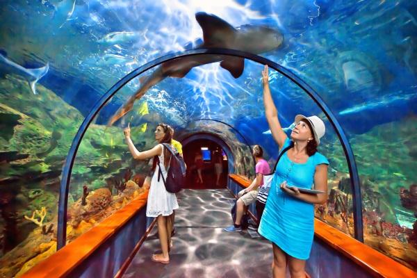 Tunel in acvariul Loro Parque
