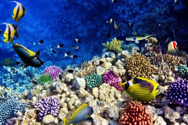 Corali si pesti, Marea Rosie, Egipt, Africa