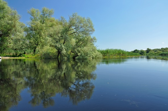 Flooded forest in the Danube delta shutterstock_145570648